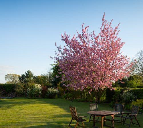 Sådan kommer du i gang med forårets havearbejde